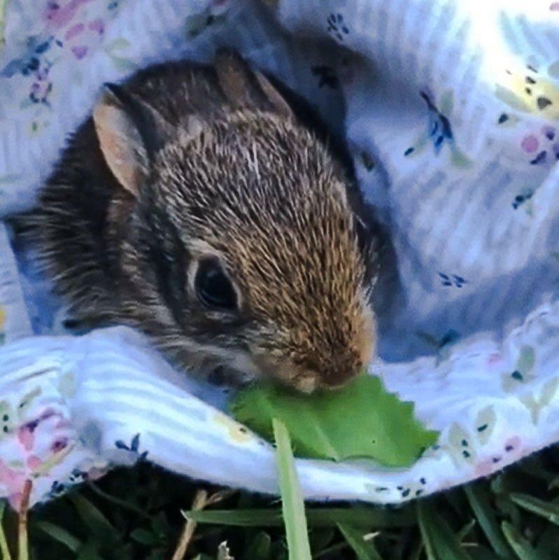 Saving an abandoned rabbit but was it a good idea