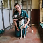 Battersea Dogs & Cats Home