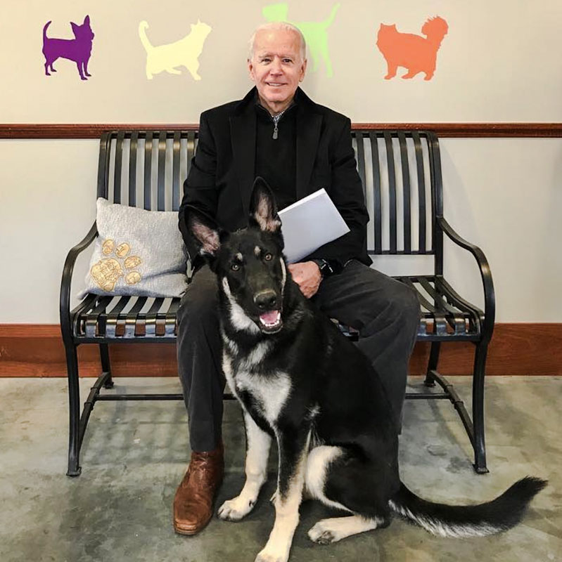 Biden and his newly adopted German shepherd Major
