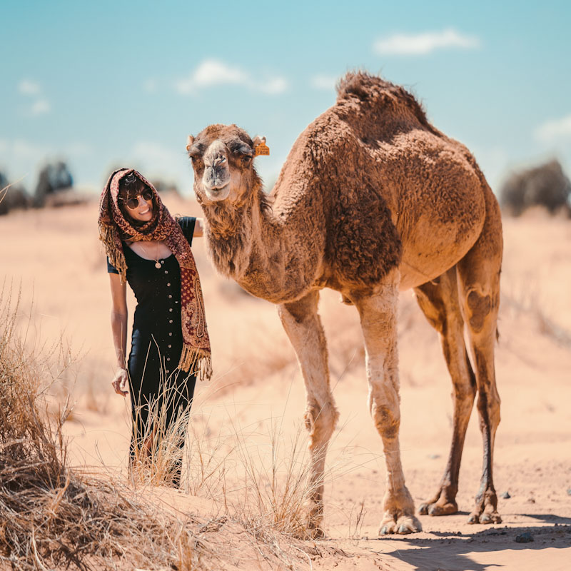 Camel - Scientists have learned how to keep things cool thanks to the camel's anatomy