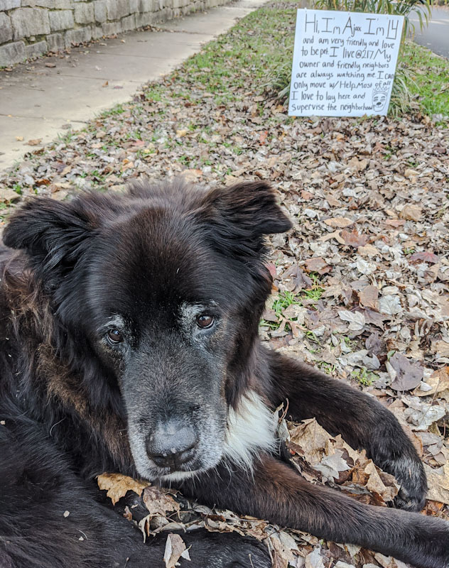 Dog (Ajax) rests outside beside road with a sign to tell passers by that he is okay and not to rescue him.