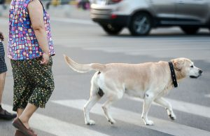 Dog-walking in China is under scrutiny
