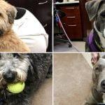 Dogs illustrating Kamala Harris's tweet