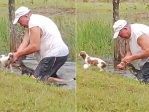 Forida man prises open jaws of alligator to save the life of his little dog