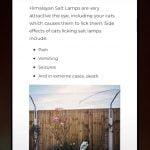 Himalayan salt lamps toxic to domestic cats