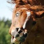 Horse headshaking