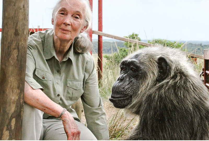 Jane Goodhall and friend