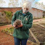 Ms Dougall (presumed) with one of the hedgehogs