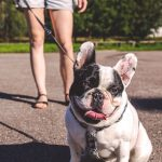 Walking your dog increases the risk of contracting Covid by 72 percent