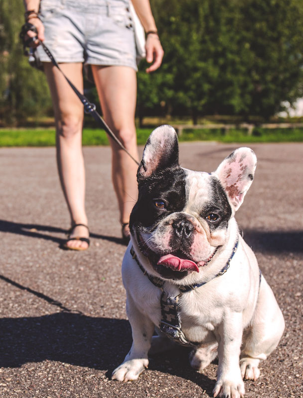 Walking your dog increases the risk of contracting Covid by 78 percent
