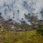 Deforestation for cattle farming in Amazon