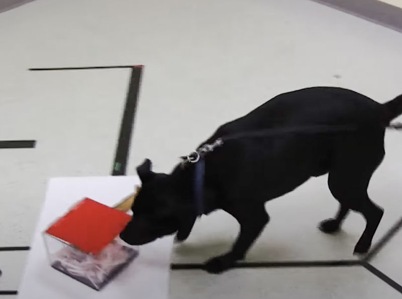 Dog in study cuts to the chase and ignores irrelevant information taught to him