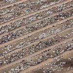 Huge cattle ranch Brazil causing deforestation
