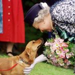 Queen meets a dog bred from one of her own showing her love of dogs