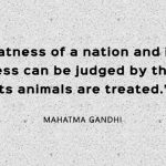 A country is moral if it treats animals with kindness and respect