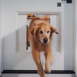 Advanced dog door. MyQ Pet Portal