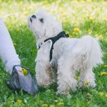 Compostable dog poop bags are good for the environment
