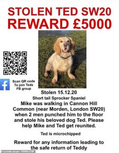 Mike Jasper's dog Ted stolen in an unpleasant theft