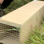 Stoat trap